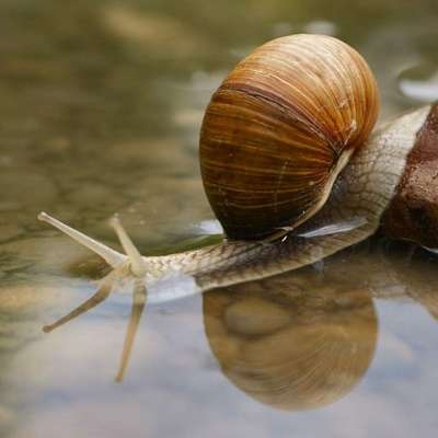 Snail slime and snake venom : Welcome in the Universe of CARABACOL